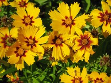 wildflowers, italy