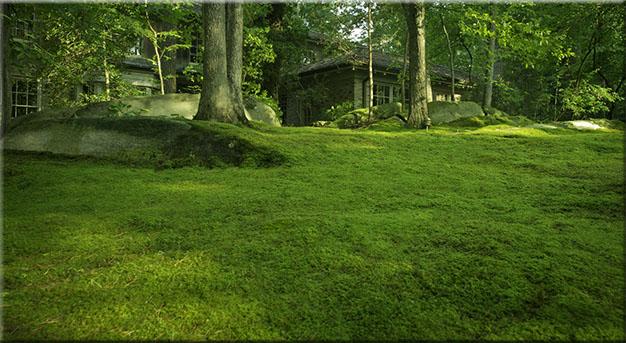 Moss (1)