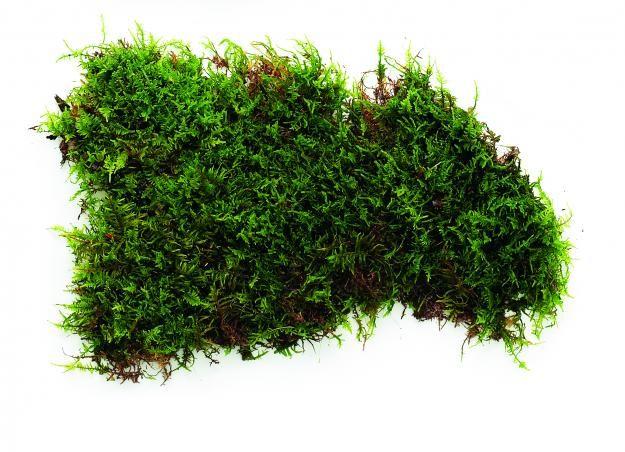 Moss (2)