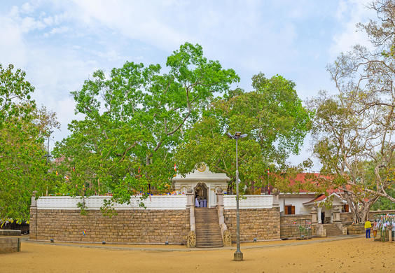 Panorama of Jaya Sri Maha Bodhi Temple with a Sacred Bodhi Tree, rising above the building, Anuradhapura, Sri Lanka.